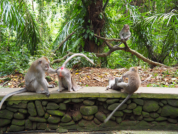Allò que fan els micos.