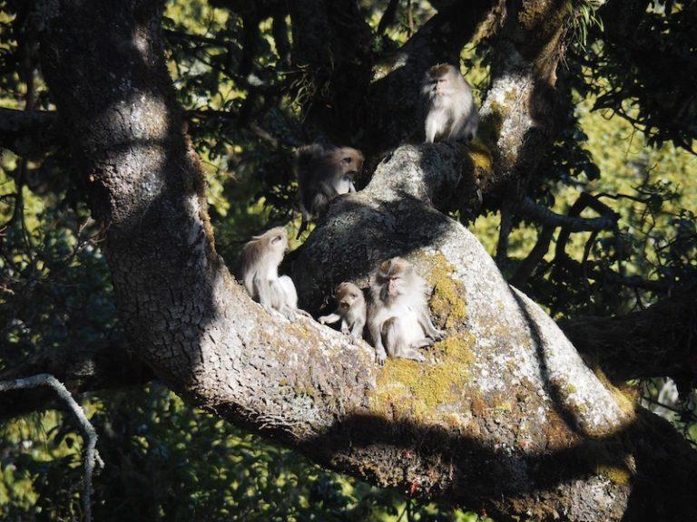 Família de micos que trobem pel camí.